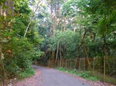 Hutan Penelitian Dramaga