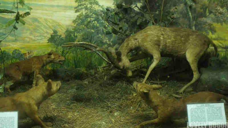 Foto Museum Zoologi Bogor