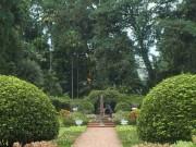 Teijsman Garden Bogor Botanical Gardens