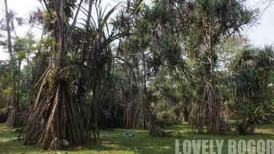 Things to see in Bogor Botanical Garden