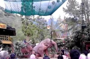 Atraksi Gajah Di Taman Safari Bogor
