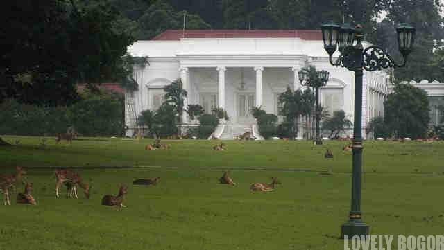 Bogor Palace and The White Spotted Deer