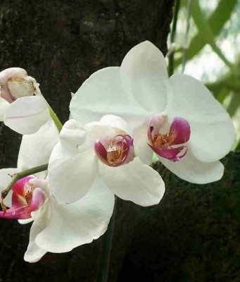 Say It With Flowers - The orchids