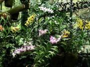 Flowers In Bogor