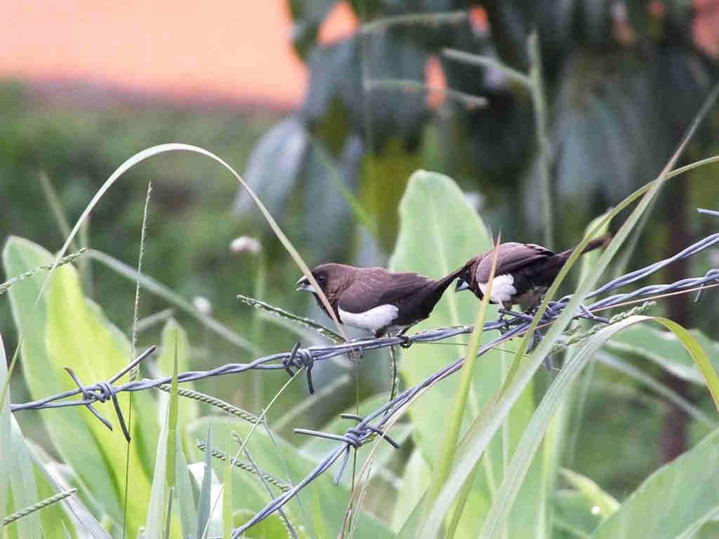 Burung Kecil di Kawasan Puncak Bogor