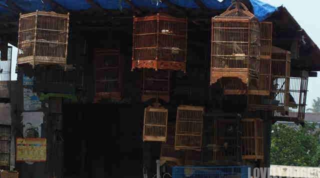 Pedagang Burung Di Kawasan Empang