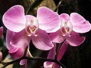 The Orchids 05