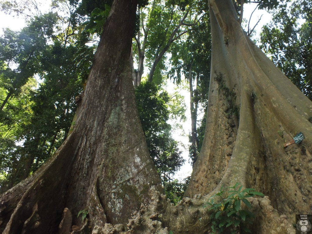 Pohon Jodoh Pasangan Berlainan Bangsa Lovely Bogor