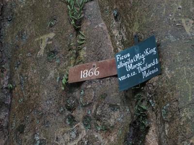 Mitos Pohon Jodoh Kebun Ray Bogor