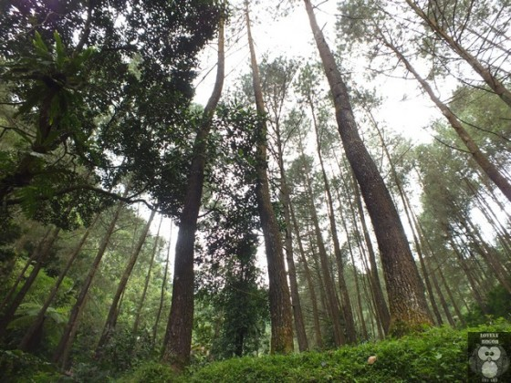 Curug Cilember Bogor
