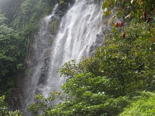 Tips Berwisata ke Bogor