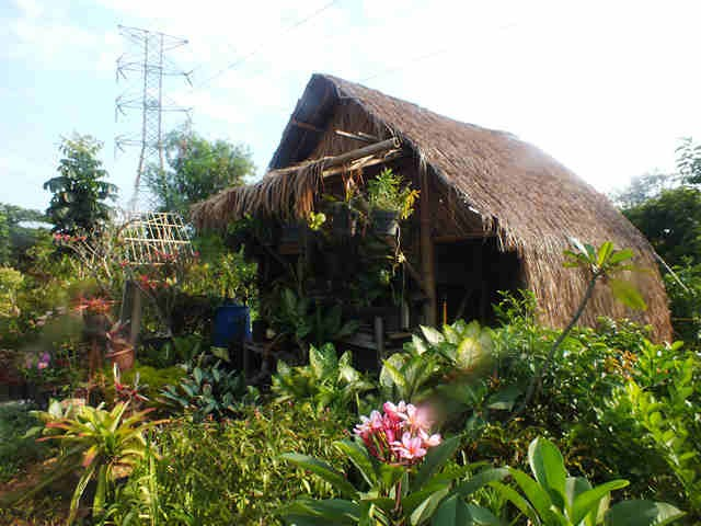 Sentra Tanaman Hias Katulampa