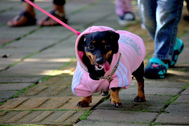 anjing anjing lucu nan imut di Car Free Day Bogor 2
