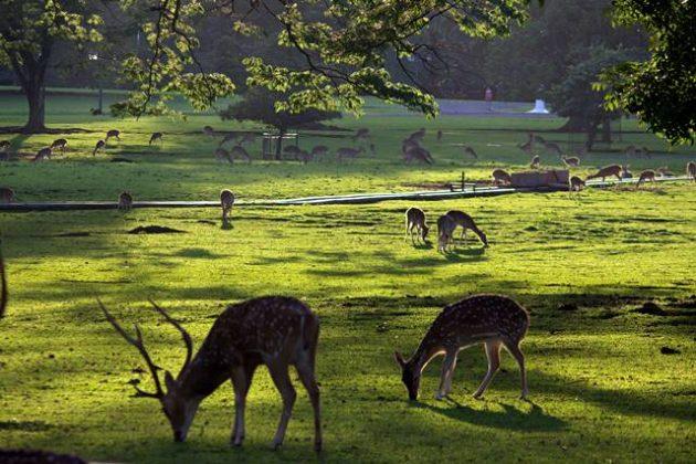 rusa totol sedang makan di bawah pohon d