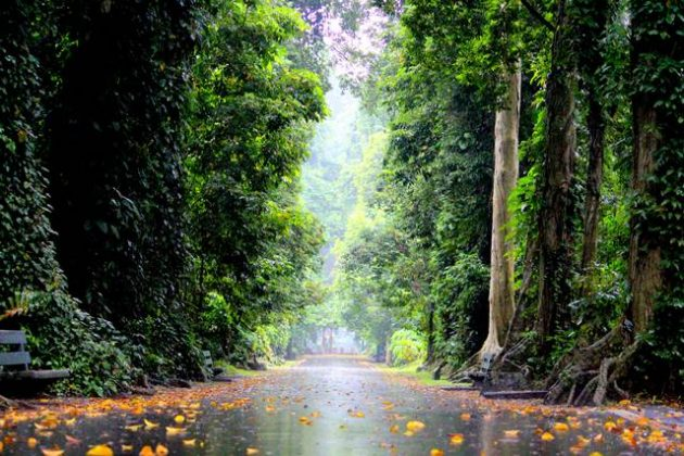 5 spot foto terbaik di kebun raya bogor 3 - Jalan Kenari c