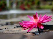Aplikasi Jawara - Jelajah Belajar dan Wisata di Kebun Raya Bogor A