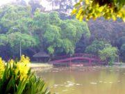 [JANGAN DITIRU!] Cara Pengunjung Tak Bertanggungjawab Menyembunyikan Sampah di Kebun Raya Bogor 2