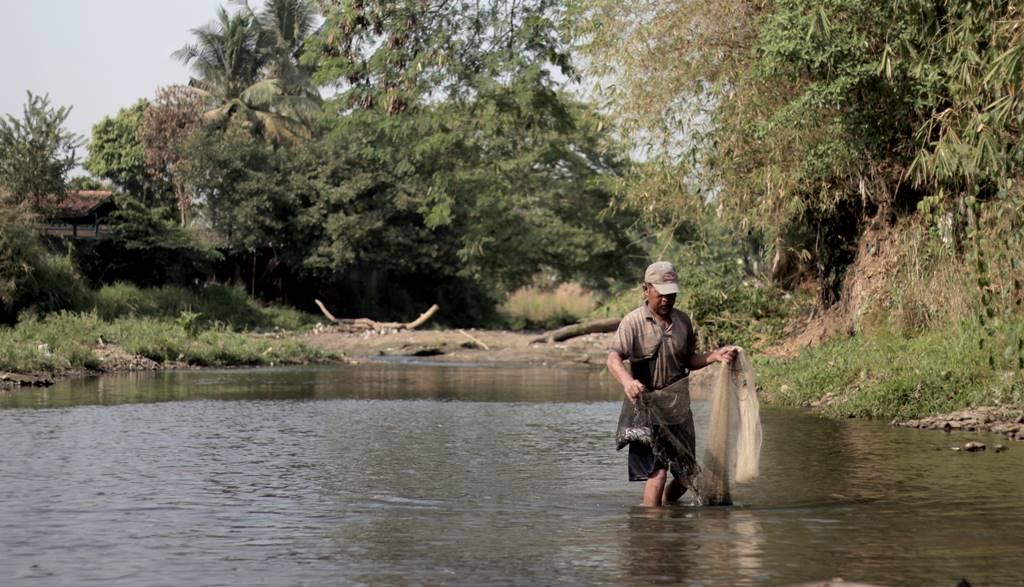 Ikan Gehed Species Asli Kali Ciliwung C