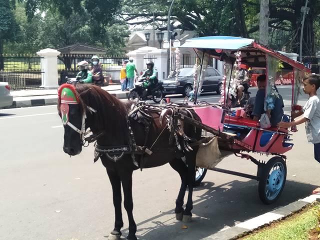 Kalau di Bogor Delman Hias Bukan Cuma Ada Saat karnaval Saja 2