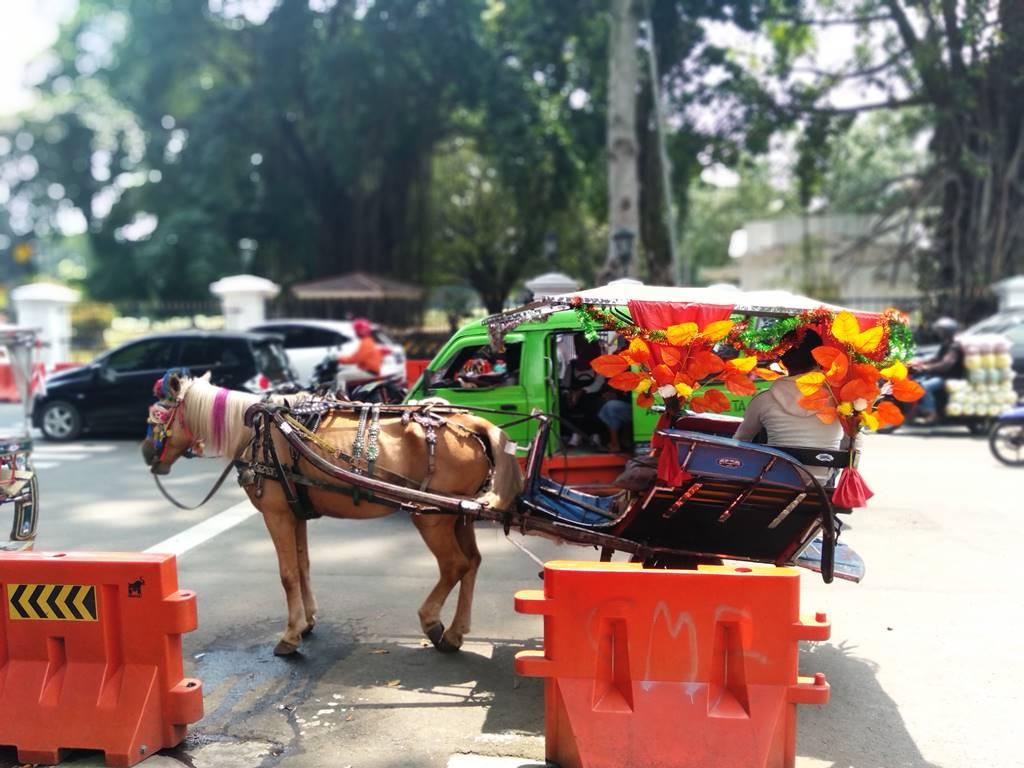 Kalau di Bogor Delman Hias Bukan Cuma Ada Saat karnaval Saja